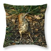 Brown Thrasher Throw Pillow