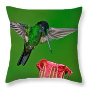Buff-winged Starfrontlet Throw Pillow