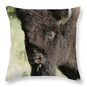 Buffalo Painterly Throw Pillow
