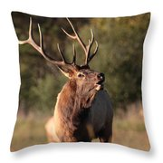 Bugling Bull Elk Throw Pillow