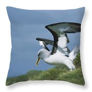 Bullers Albatross With Colorful Bill Throw Pillow