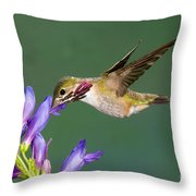 Calliope Hummingbird Stellula Calliope Throw Pillow