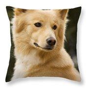 Canaan Dog Throw Pillow