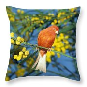 Canari De Couleur Rouge Throw Pillow