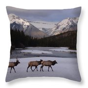 Elk Crossing, Banff National Park, Alberta Throw Pillow
