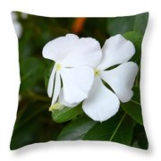 Catharanthus Roseus Throw Pillow