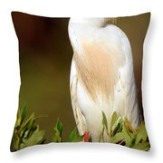 Cattle Egret Adult In Breeding Plumage Throw Pillow