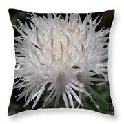 Centaurea Named The Bride Throw Pillow