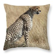 Cheetah Searching For Prey Throw Pillow