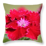 Cherry Dianthus From The Floral Lace Mix Throw Pillow