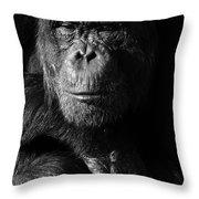 Chimpanzee Monochrome Portrait Throw Pillow