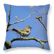Chipping Sparrow Perched In A Tree Throw Pillow