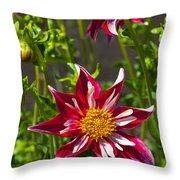 Christmas Star Dahlia And Bee Throw Pillow