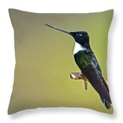 Collared Inca Throw Pillow