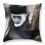 Colobus Monkey Throw Pillow