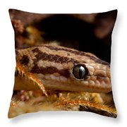 Colombian Rainbow Boa Epicrates Maurus Throw Pillow