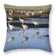 Common Crane Grus Grus Throw Pillow
