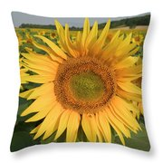 Common Sunflower Helianthus Annuus Throw Pillow