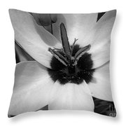 Corn Lily Named Giant Throw Pillow