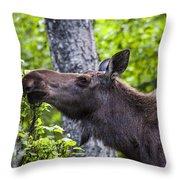Cow Moose Throw Pillow