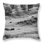 Cows Grazing In Field Rockport Maine Throw Pillow