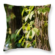Creeper Leaves Under The Sun Throw Pillow