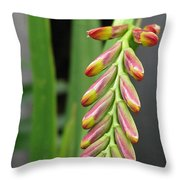 Crocosmia Named Lucifer Throw Pillow