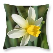 Cyclamineus Daffodil Named Jack Snipe Throw Pillow