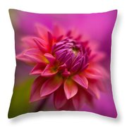 Dahlia Burst Throw Pillow