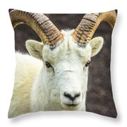 Dall Sheep Throw Pillow