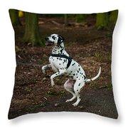 Dalmatian 5 Throw Pillow