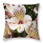 Desert Willow Throw Pillow