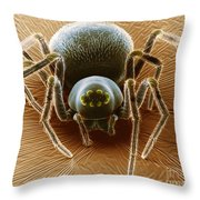 Dictynid Spider Throw Pillow by David M. Phillips