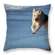 Dog On Beach Throw Pillow