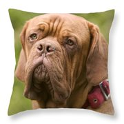 Dogue De Bordeaux Throw Pillow