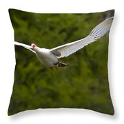 Domestic Muscovy Ducks In Flight   #1137 Throw Pillow
