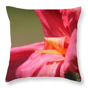 Dwarf Canna Lily Named Shining Pink Throw Pillow