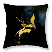 Early Fall Of  Downy Birch Throw Pillow