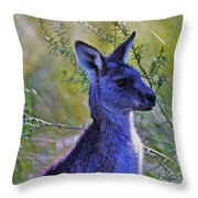 Eastern Grey Kangaroo Throw Pillow