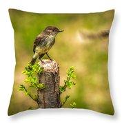 Eastern Phoebe Throw Pillow by Bob Orsillo