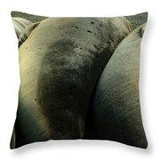 Elephant Seal Pups Throw Pillow