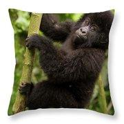 Endangered Mountain Gorillas Habitate Throw Pillow