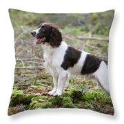 English Springer Spaniel Dog Throw Pillow