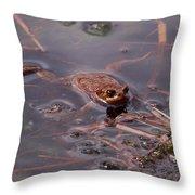 European Common Brown Frog Throw Pillow