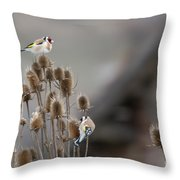 European Goldfinch Throw Pillow