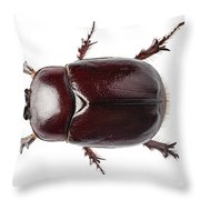 European Rhinoceros Beetle Female  Throw Pillow
