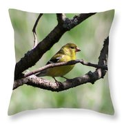 Female American Goldfinch Throw Pillow