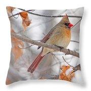 Female Cardinal In Winter Throw Pillow
