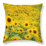 Field Of Sunflowers Helianthus Sp Throw Pillow