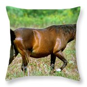 Florida Spanish Horse Throw Pillow